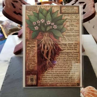 Mandrake Book of Shadows Page